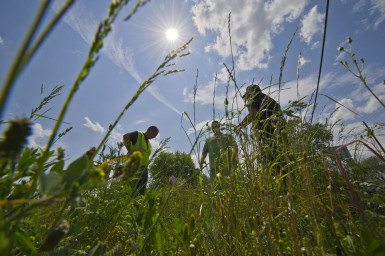 county land banks