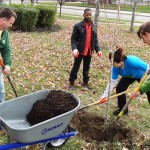 Grants are now available for fall tree-planting projects