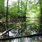 Land Conservancy preserves part of Oberlin Great South Woods