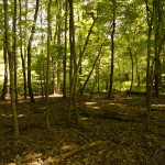 Mill Creek MetroParks adds 19 acres to Egypt Swamp Preserve