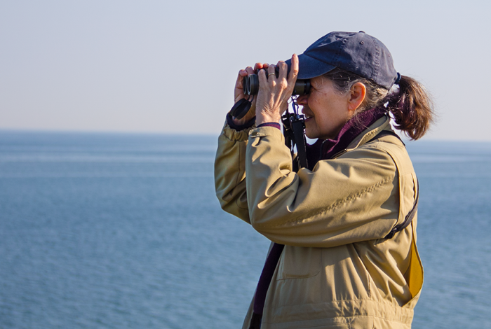 Lake Erie Bluffs Birding
