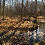 52 acres permanently preserved in Rootstown Township