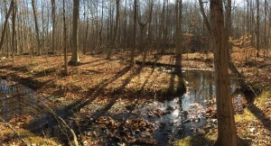 Rootstown Township Land - Western Reserve Land Conservancy