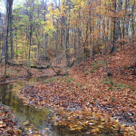 "109-acre ""oasis"" conserved in Geauga County"