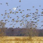 Land Conservancy receives Leader in Wetland Protection Award