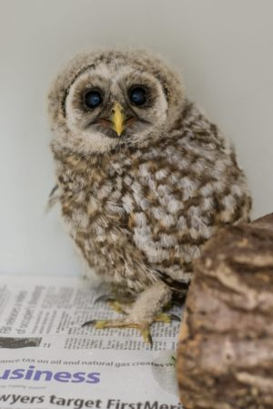 Join Members Of The Viewfinders Photography Club For A Photo Fieldtrip To The Medina Raptor Center Attire Please Wear Comfortable Clothing That You Do Not