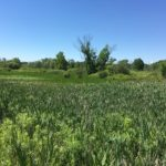 Nearly 200 acres permanently conserved in Portage County through partnership