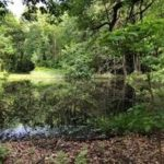 154-Acre Mature Forest in Stark County to Remain Wild