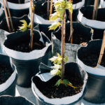 #Trees4CLE | Get Free Trees for Your Yard This Spring
