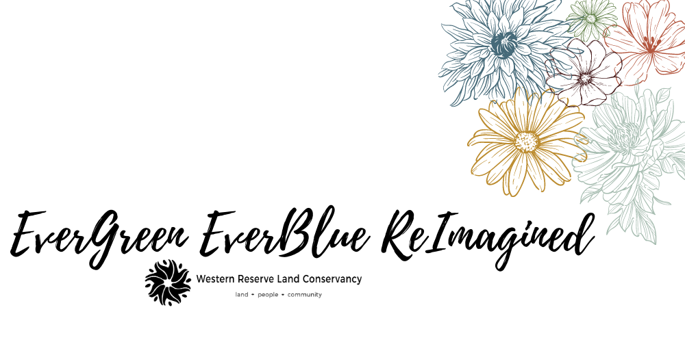 EverGreen EverBlue ReImagined