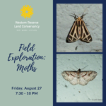 Field Exploration: Moths - SOLD OUT